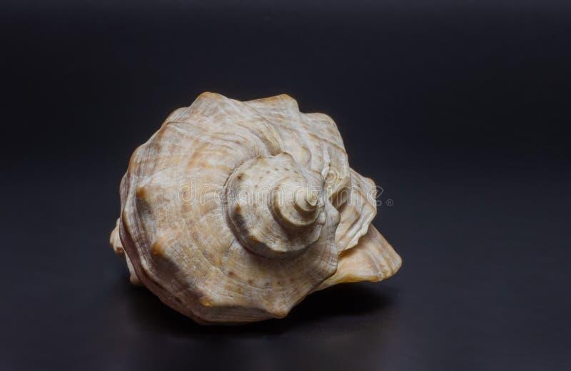 Shell zdjęcia royalty free
