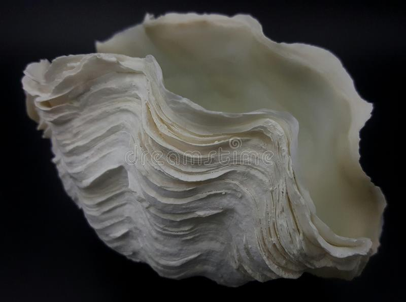 Shell der riesigen Muschel stockbild