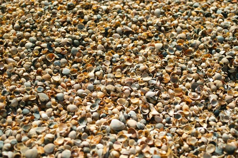 Shell do mar fotografia de stock royalty free