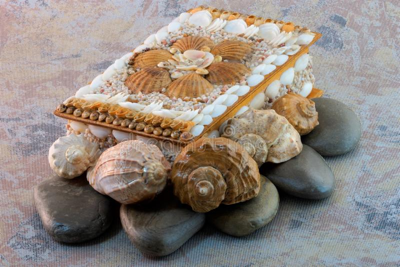 Shell do mar do caixão imagens de stock royalty free