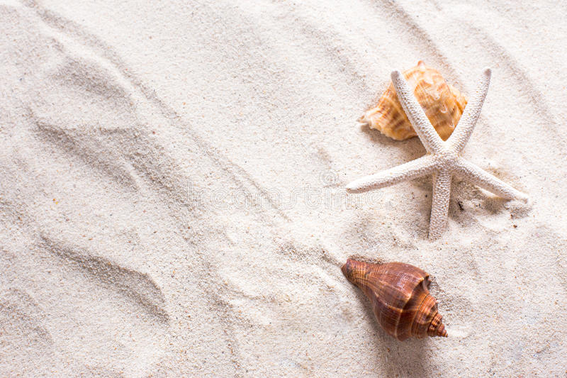 shell do mar com a areia como o fundo e o copyspace, conceito do verão imagens de stock