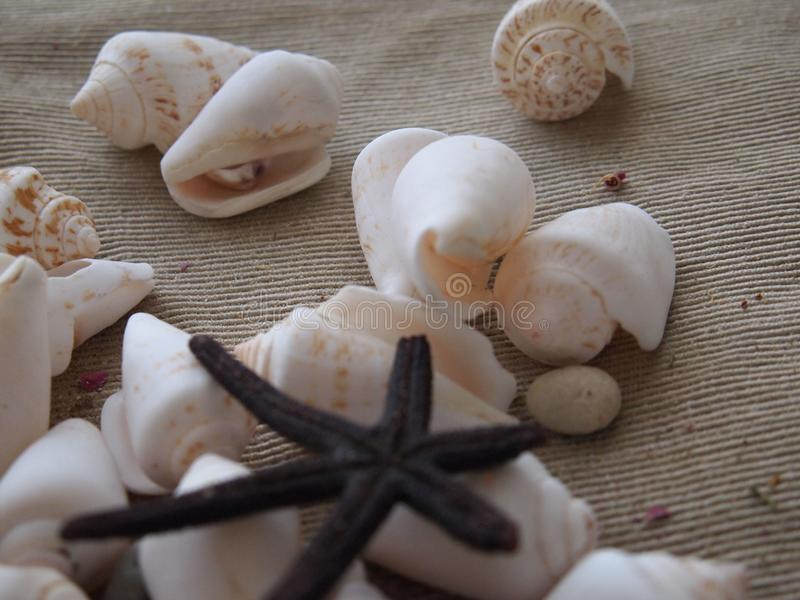 Shell do mar e mar da estrela do mar imagens de stock