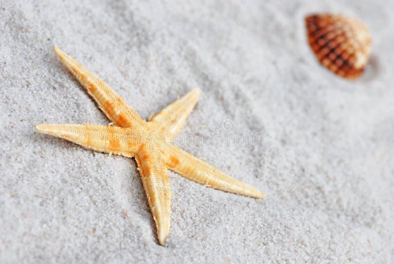 Shell do mar na areia fotos de stock royalty free