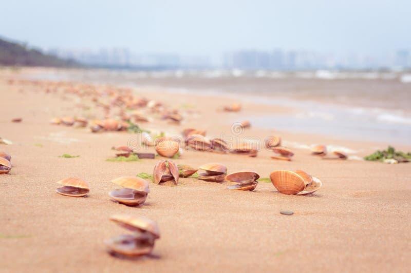 Shell do mar na praia da areia fotografia de stock royalty free