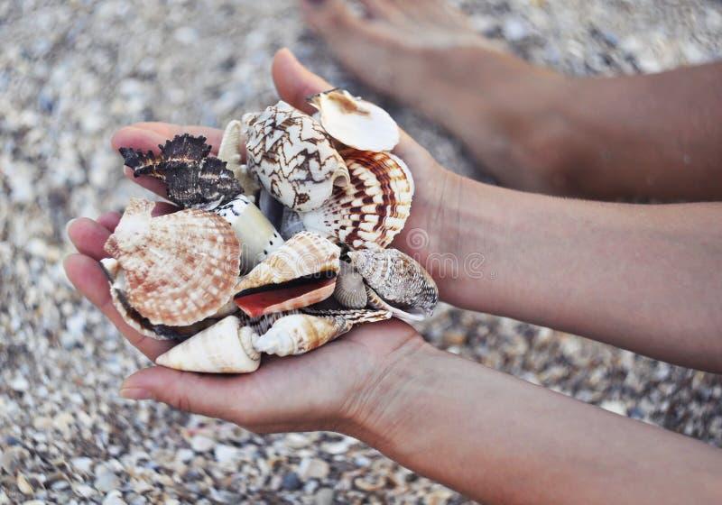 Shell do mar nas mãos no fundo da areia e do marisco imagem de stock royalty free