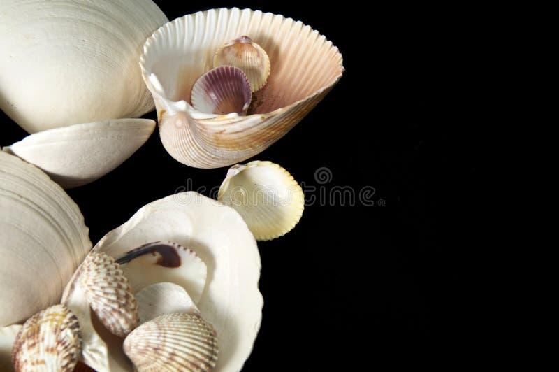 Shell do mar no fundo preto fotos de stock royalty free