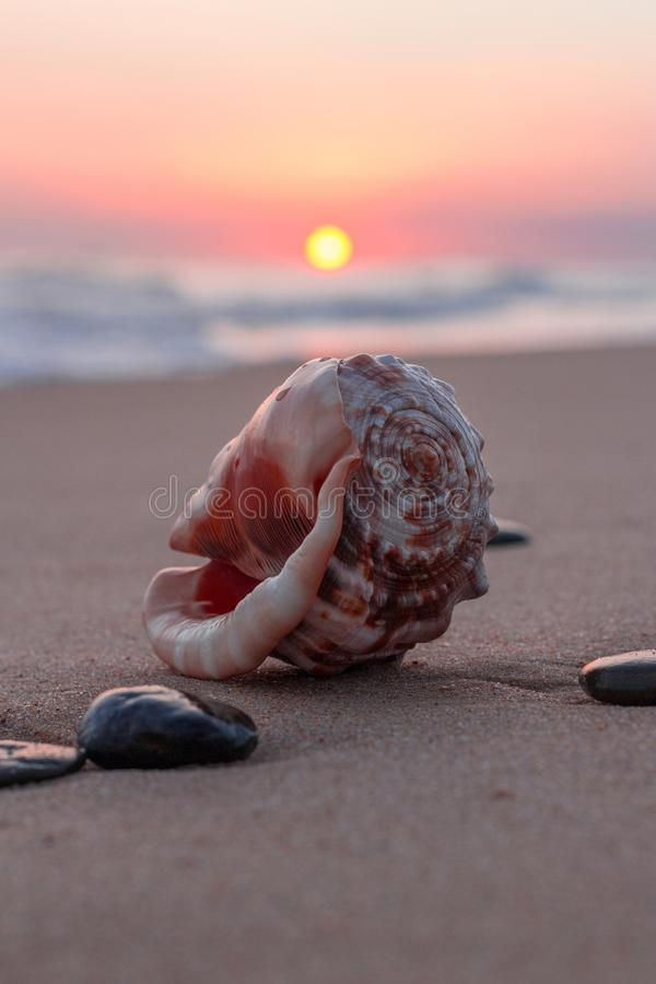 Shell do mar no por do sol imagem de stock royalty free
