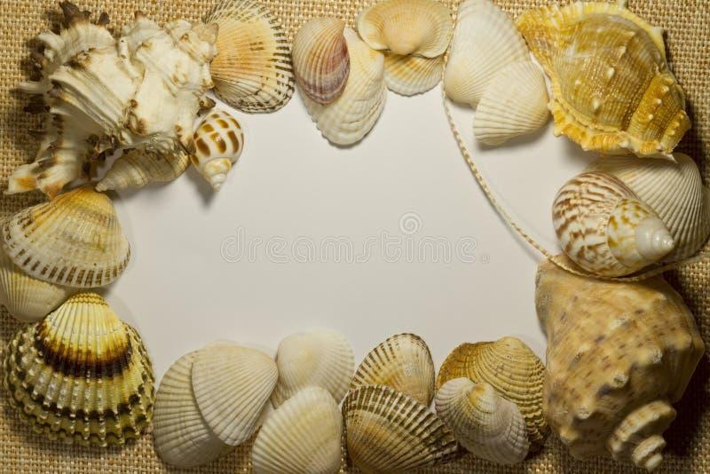 Shell do mar no saco com fundo branco fotografia de stock royalty free