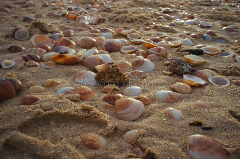 Shell do mar no sand#3 fotografia de stock