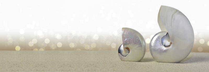 Shell do nautilus fotos de stock
