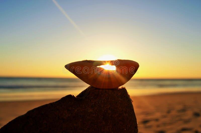 Shell do por do sol imagem de stock royalty free