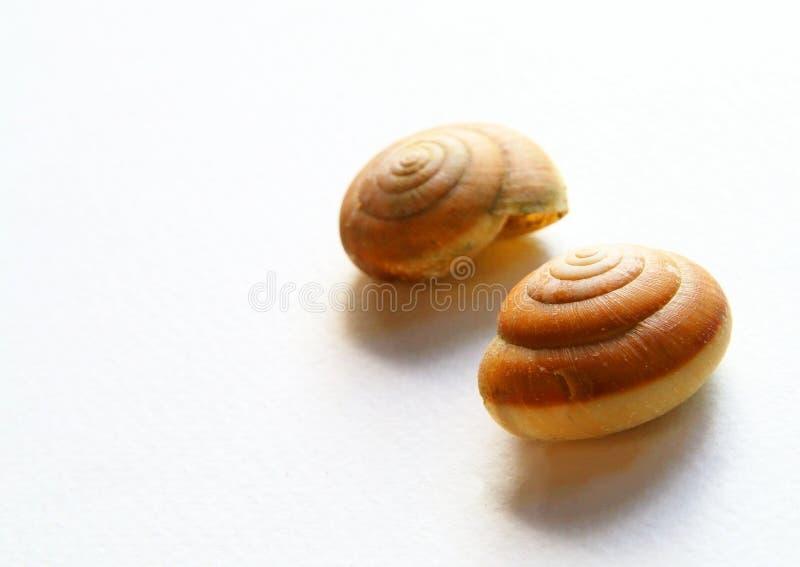 Shell do prego imagens de stock