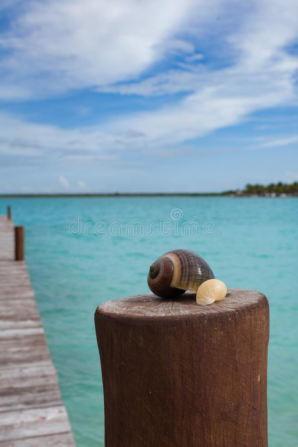Shell dos colores do sieste da lagoa de Bacalar imagens de stock