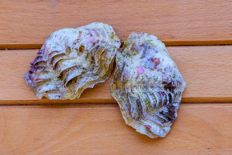 Shell du mollusque de tridacna sur la table en bois Vue supérieure images libres de droits