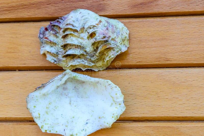 Shell du mollusque de tridacna sur la table en bois Vue supérieure images stock