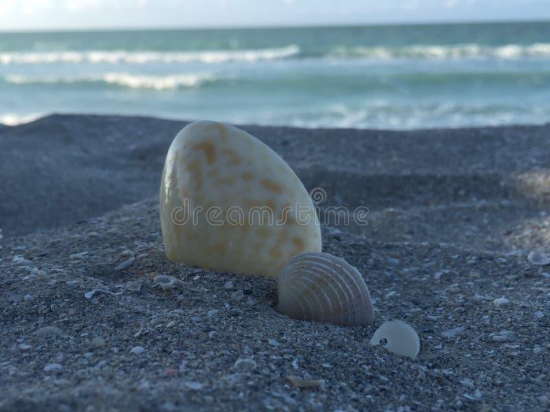 Shell e horizonte imagem de stock