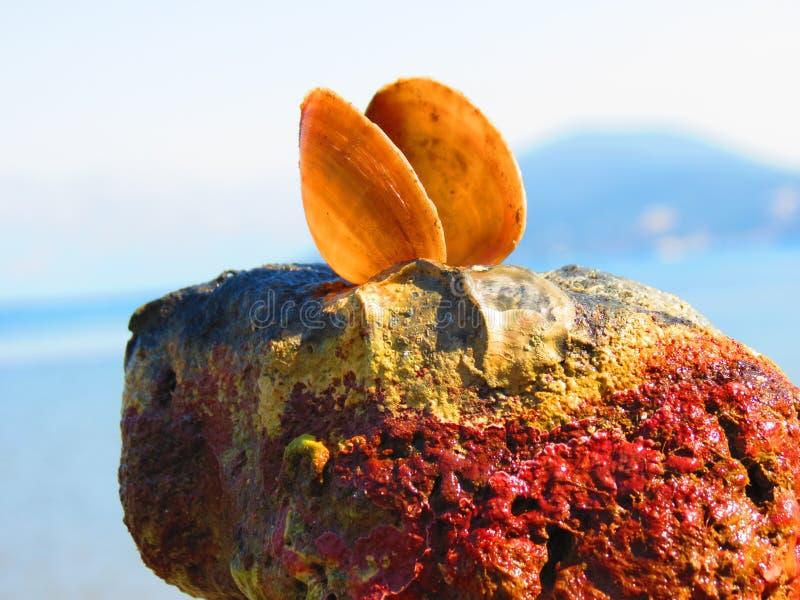 Shell e pedra imagens de stock