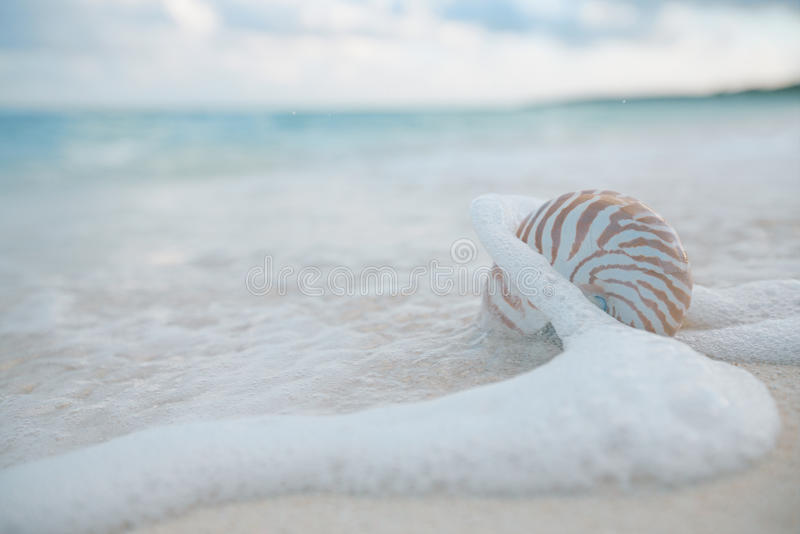Shell em ondas do mar, ação ao vivo do nautilus imagem de stock