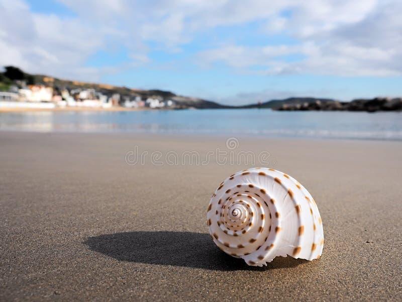 Shell On Empty Beach på Lyme Regis royaltyfri fotografi