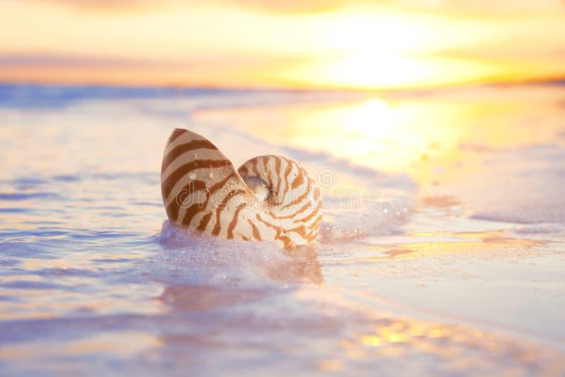 Shell en el mar, salida del sol del nautilus foto de archivo