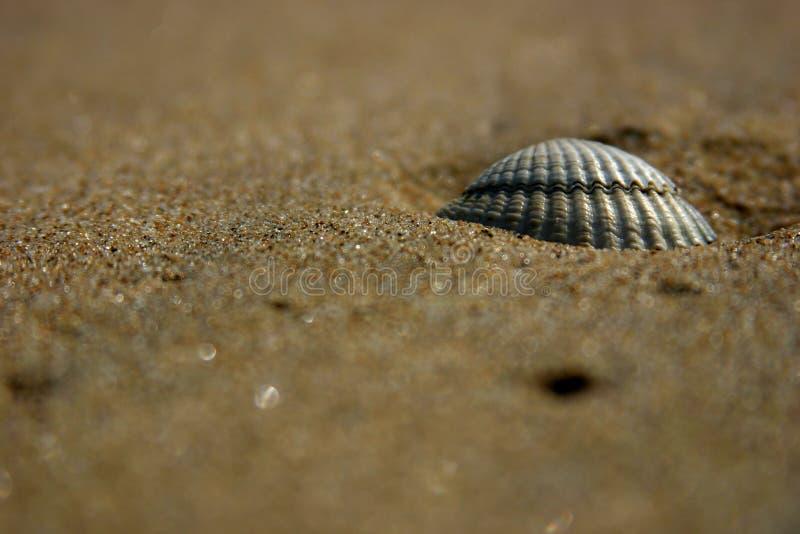 Shell en la playa imágenes de archivo libres de regalías