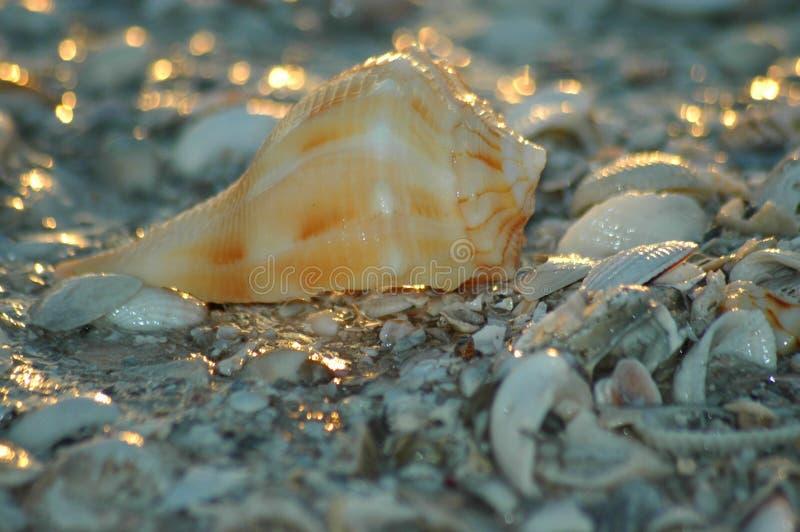 Download Shell en la playa foto de archivo. Imagen de amarillo, oceanside - 175886
