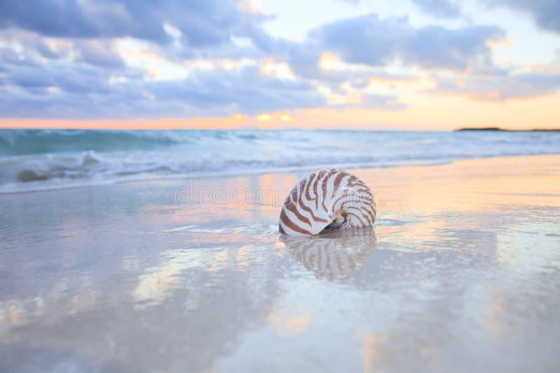 Shell en la playa del mar, salida del sol del nautilus. foto de archivo libre de regalías