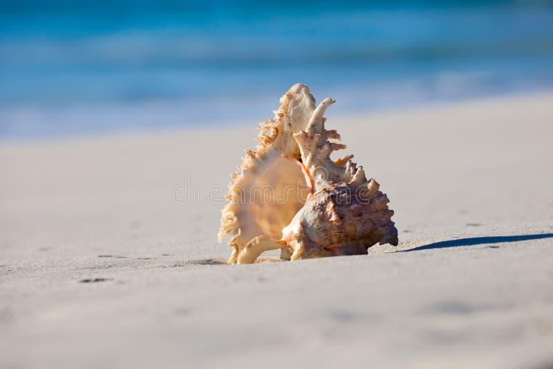 Shell en overzees stock foto's