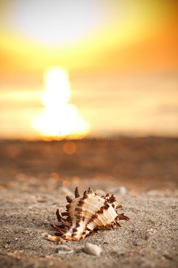 Shell en puesta del sol fotos de archivo libres de regalías