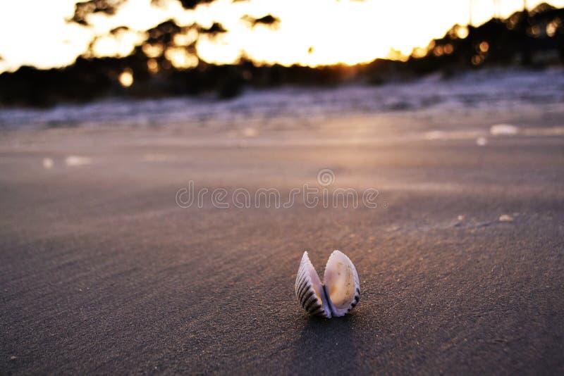 Shell en una playa fotografía de archivo libre de regalías