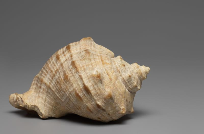 Shell fotos de stock