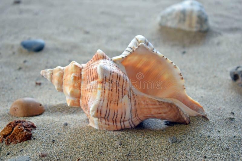 Shell espiral na areia imagem de stock