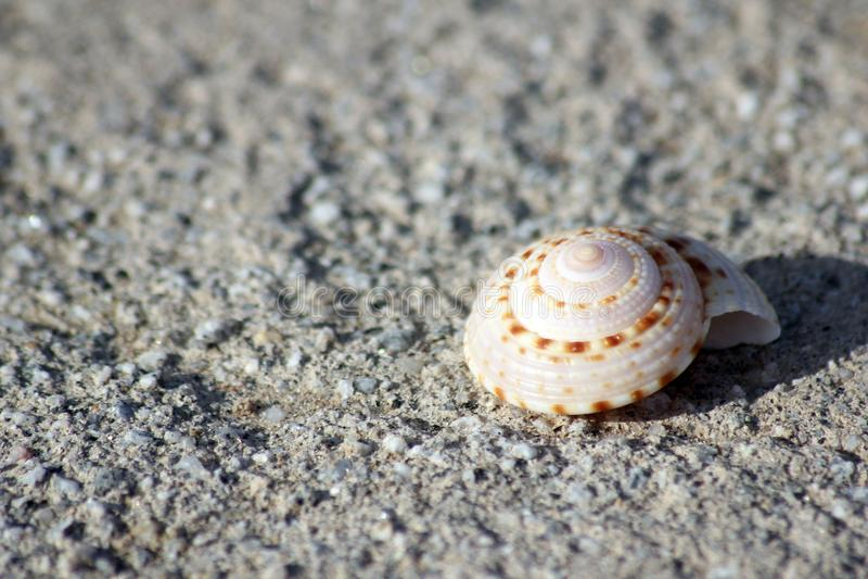 Shell espiral perfeito do mar na areia imagem de stock royalty free
