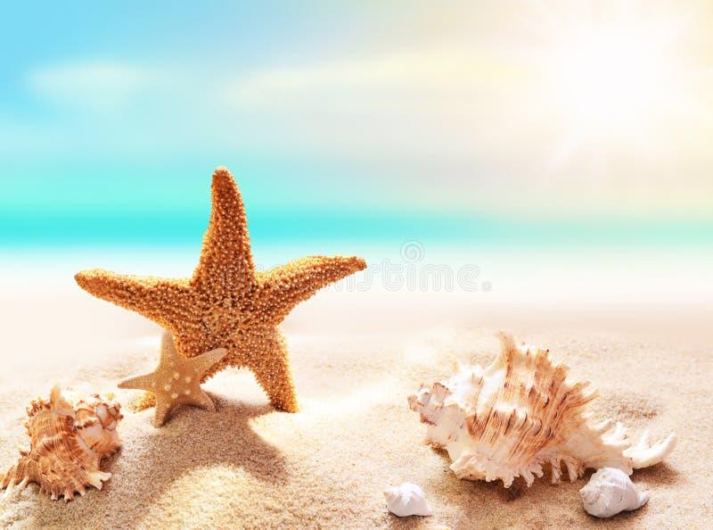 Shell et étoiles de mer sur la plage sablonneuse photo stock