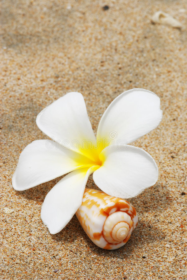 Shell & flower on a beach royalty free stock photography