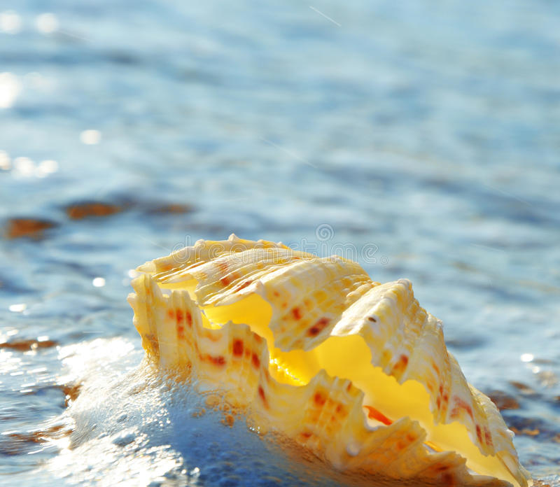 Download Shell in foam stock photo. Image of pearl, summer, shell - 28393740