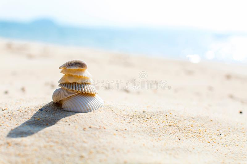 Shell focalizados seletivos na praia Imagem de fundo do verão imagens de stock