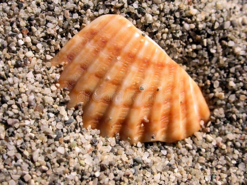 Shell fragment royalty-vrije stock fotografie