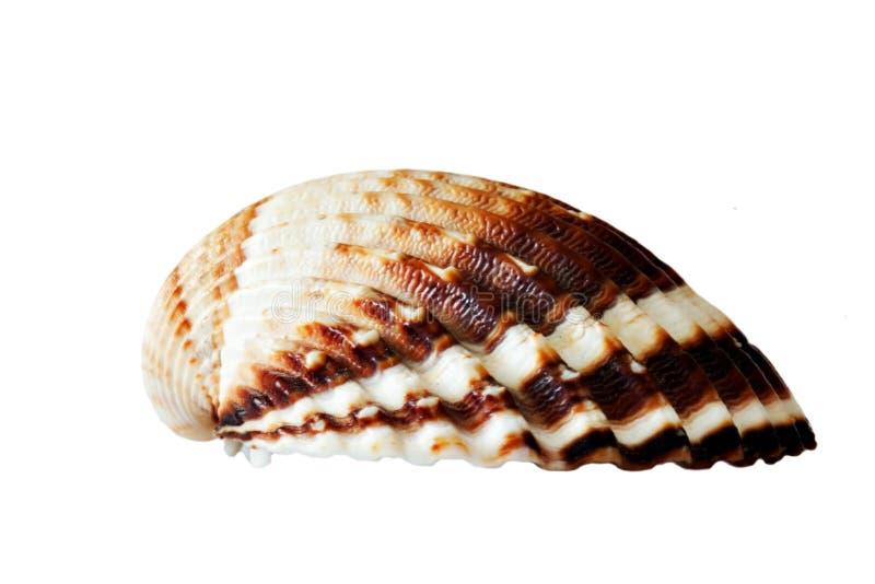 Shell getrennt lizenzfreies stockfoto