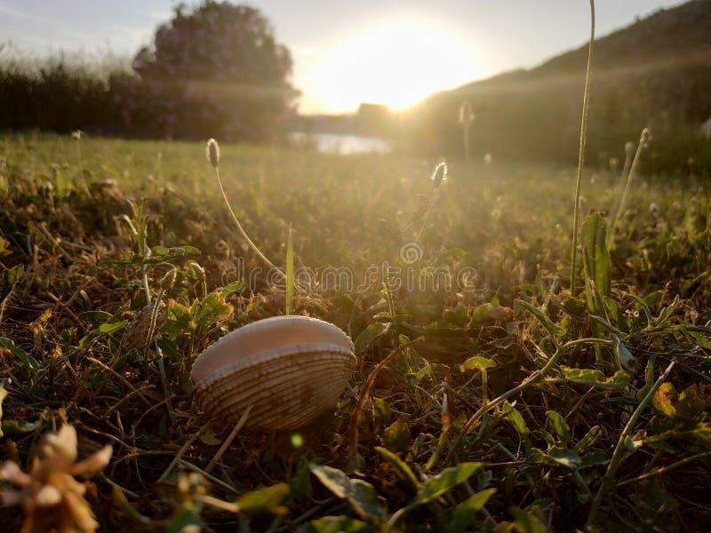 Shell arkivfoto