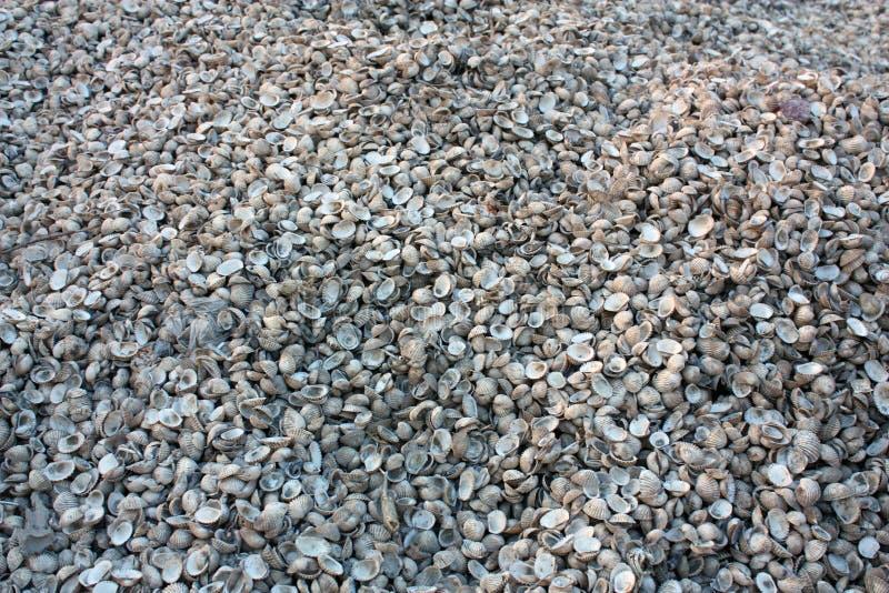 Shell hög på jordning royaltyfri foto
