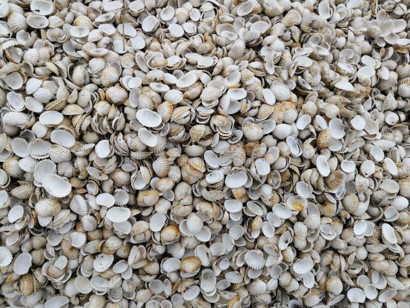 Shell-haan De textuur van Escalopekokkels stock foto