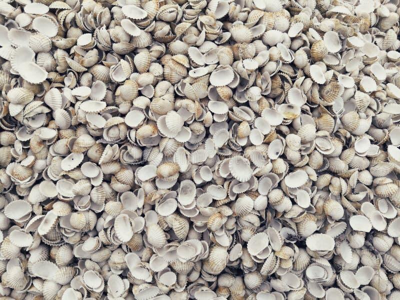 Shell-haan De textuur van Escalopekokkels stock fotografie