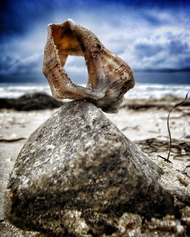 Shell hav arkivfoton