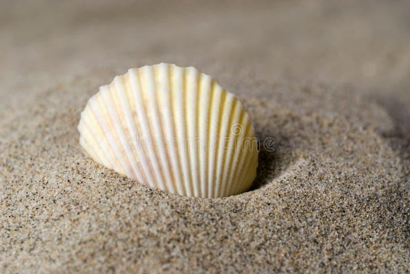 Shell in het zand stock foto