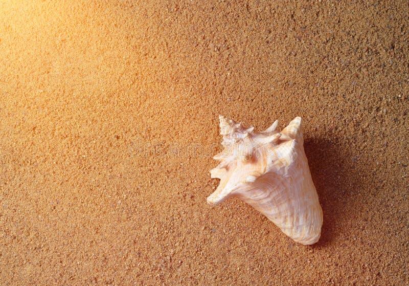 Shell in het zand Het concept rust op het strandseizoen is open! Hoogste mening stock foto