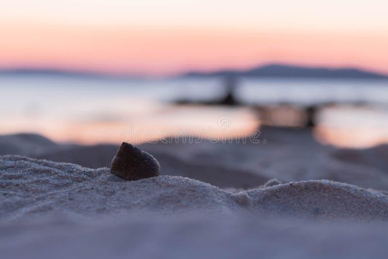 Shell in het zand stock afbeelding