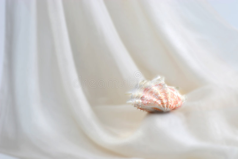 Download Shell II stock image. Image of soft, silk, folds, shell - 84135