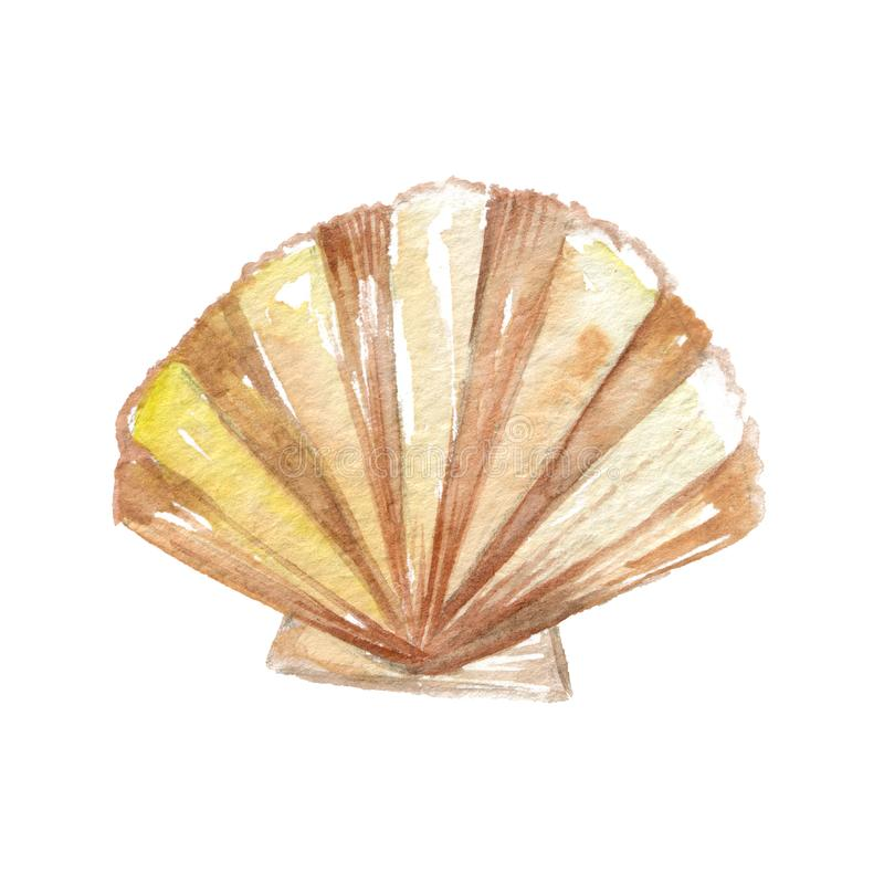 Shell. Illustrations of Yellow Sea Shell. Freehand Sketching Illustration. Ink Wash Painting. Hand Drawn Watercolor Painting on White stock illustration