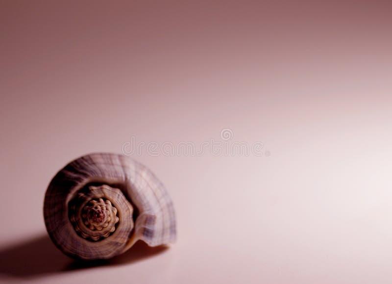Download Shell im Rot stockfoto. Bild von strand, krebs, nachricht - 37140
